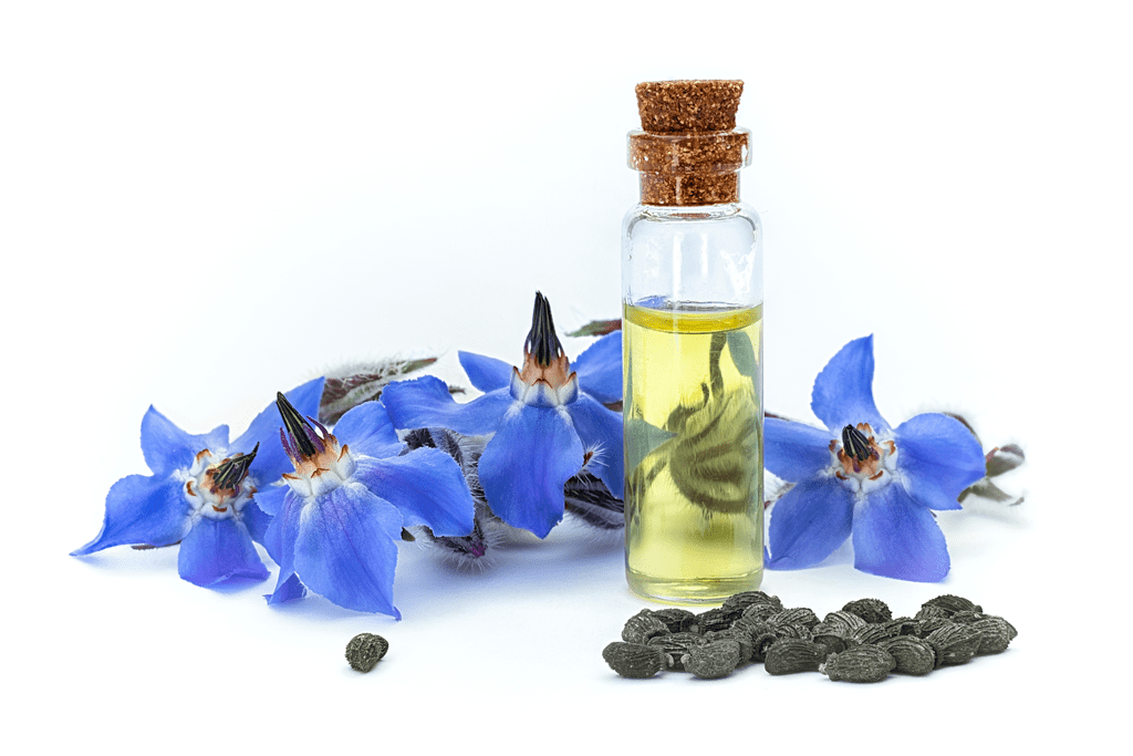 Starflower Oil: What is it Good For? | Starflower Oil | Healthy